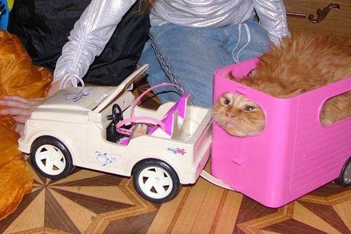 Voiture pour chat