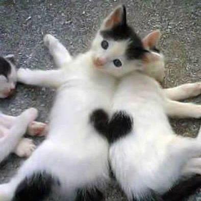 coeur chat