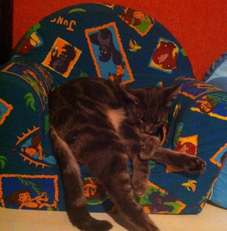 Fifi dans son trône