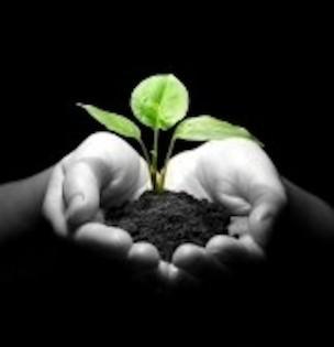 plante grandir