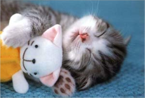 sommeil chat