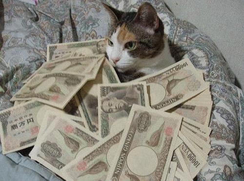 chat rançon