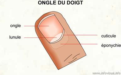 030 Ongle du doigt
