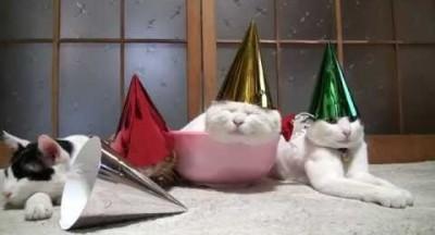 fête chat