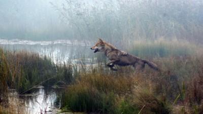 wolf-le-dernier-loup-jean-jacques-annaud